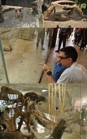 Batu Secret Zoo2