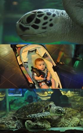 Batu Secret Zoo3