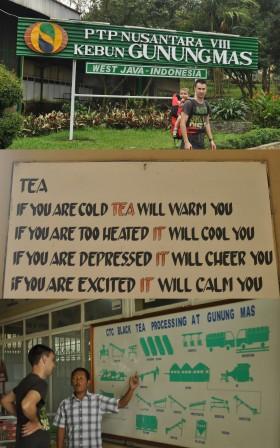 Gedung Mas Tea Plantation