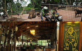 Singapore Zoo13