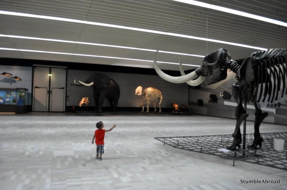 {FrankfurtForKids} Natural History MuseumFrankfurt
