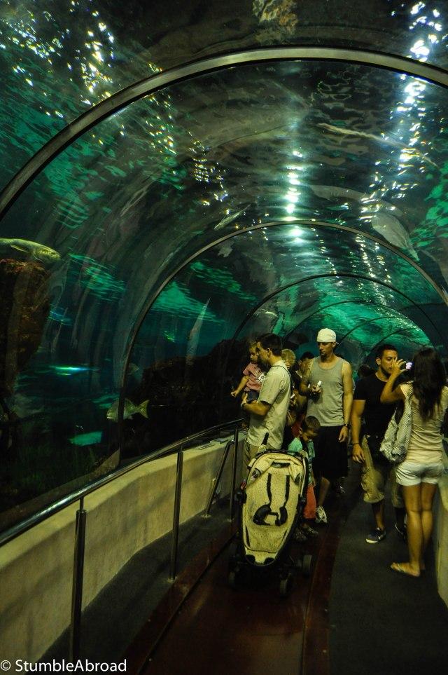 Tunnel in the Oceanarium