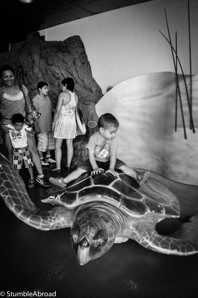 Riding on a turtle replica