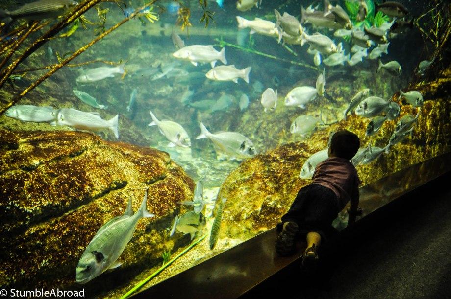 {BarcelonaForKids} L'Aquarium Barcelona