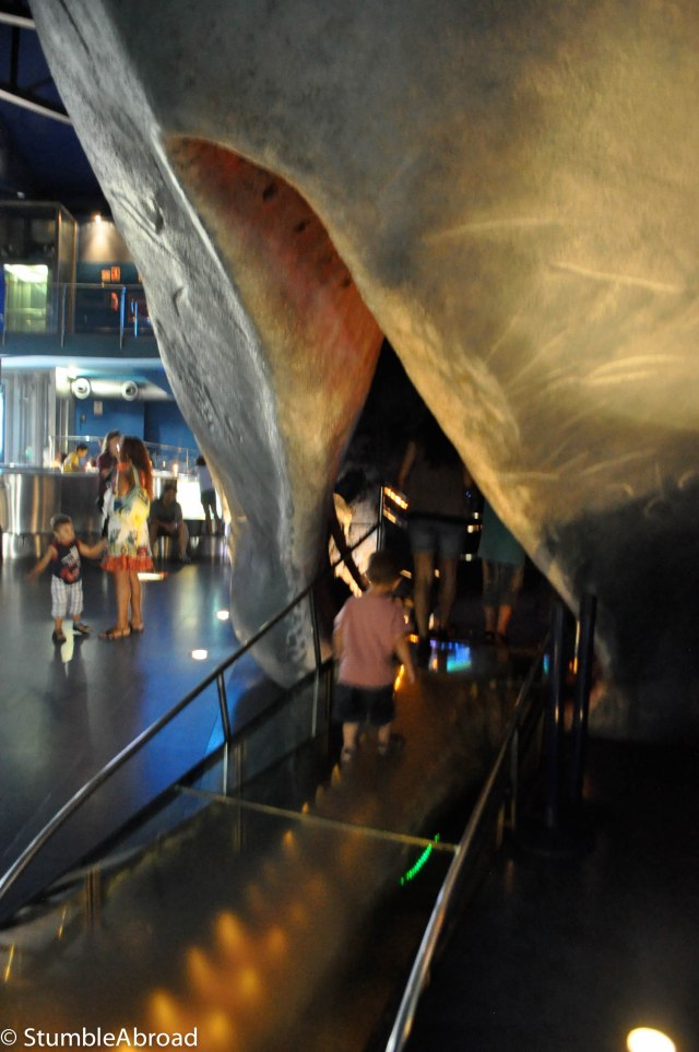 Going inside the Whale's mouth