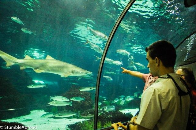We liked the Oceanarium the best