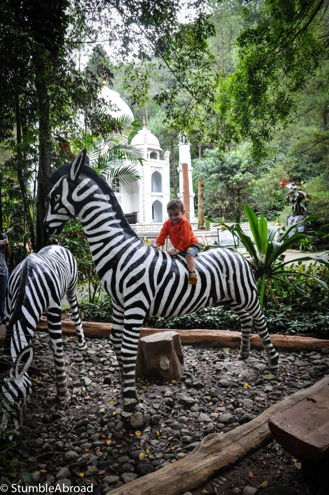 He insisted on riding the Zebra
