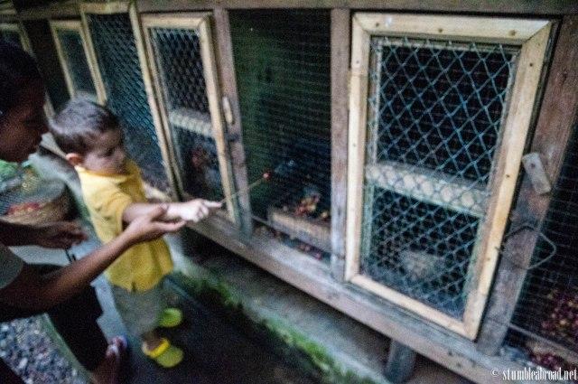 Feeding the Civet
