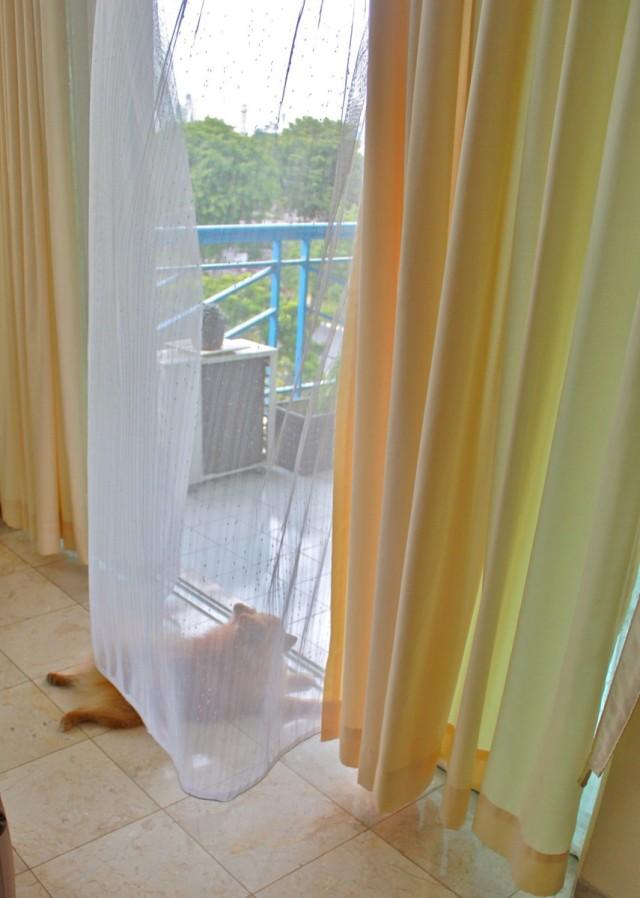 DiploDog enjoying the balcony breeze