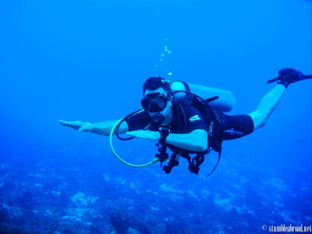 Dived in Cozumel and Playa del Carmen