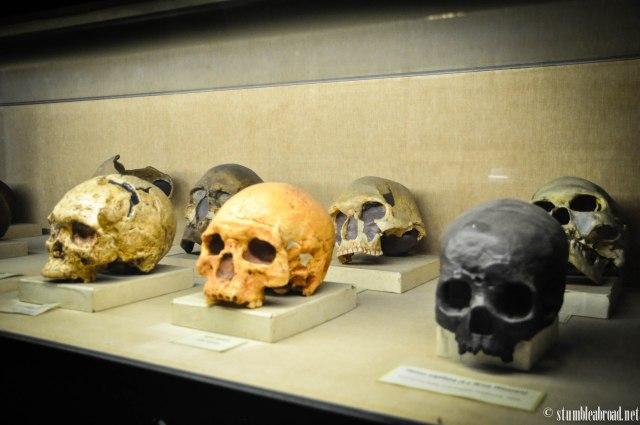 Skulls, again