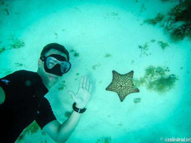 Starfish in Cozumel