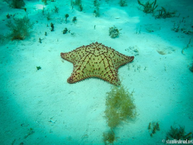 I had never seen such big starfish