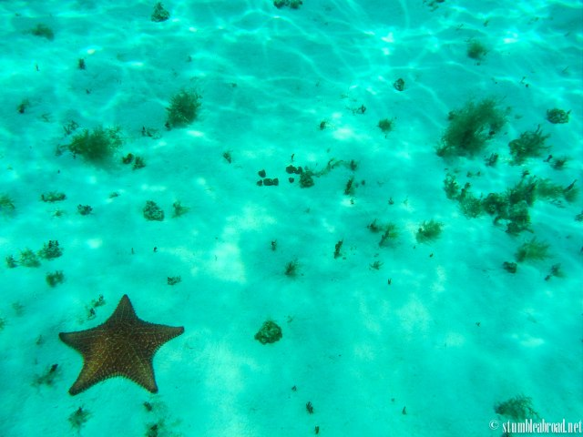 I promise this is the last starfish photo