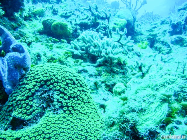More amazing coral