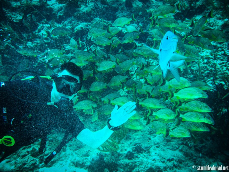 {Mexico} Diving at the RivieraMaya