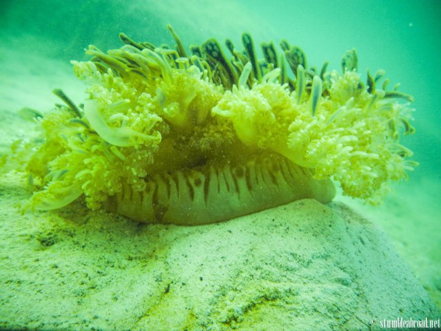 This was a cool anemone