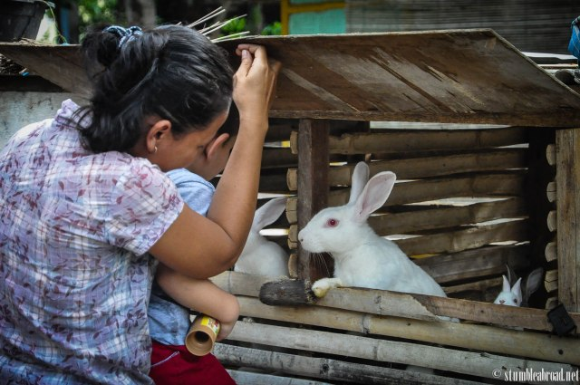 Visiting the rabbits in the village