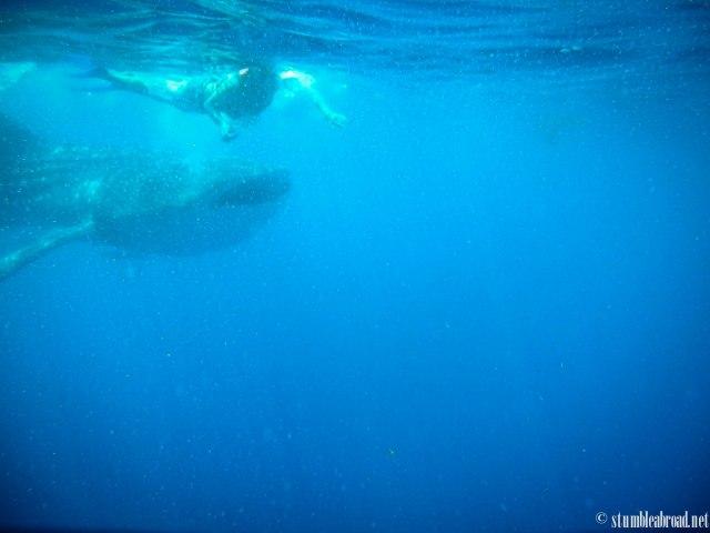 A fellow snorkeler