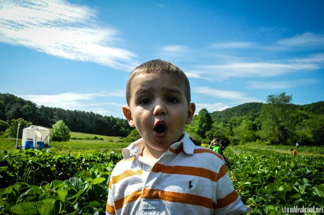 Josh enjoyed strawberry picking in a farm in Georgia